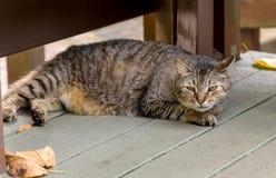 Άγρια γάτα στοκ εικόνα