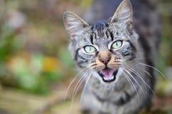 Άγρια γάτα Στοκ εικόνα με δικαίωμα ελεύθερης χρήσης