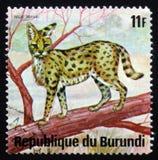 Άγρια γάτα serval Leptailurus serval, ή tierboskat, σειρά Ani Στοκ φωτογραφία με δικαίωμα ελεύθερης χρήσης