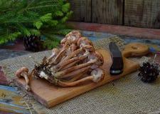 Άγρια δασικά αγαρικά μελιού μανιταριών στο ξύλινο υπόβαθρο Mellea Armillaria Μύκητας Hallimasch πηκτωμάτων μελιού ζεύγους Στοκ φωτογραφία με δικαίωμα ελεύθερης χρήσης