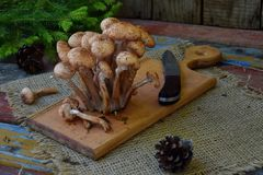 Άγρια δασικά αγαρικά μελιού μανιταριών στο ξύλινο υπόβαθρο Mellea Armillaria Μύκητας Hallimasch πηκτωμάτων μελιού ζεύγους Στοκ εικόνα με δικαίωμα ελεύθερης χρήσης