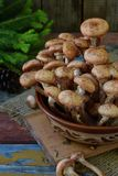 Άγρια δασικά αγαρικά μελιού μανιταριών στο ξύλινο υπόβαθρο Mellea Armillaria Μύκητας Hallimasch πηκτωμάτων μελιού ζεύγους Στοκ Εικόνες