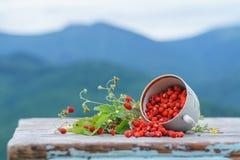 Άγρια δασική φράουλα στον αγροτικό ξύλινο πίνακα Στοκ φωτογραφία με δικαίωμα ελεύθερης χρήσης