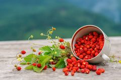 Άγρια δασική φράουλα στον αγροτικό ξύλινο πίνακα Στοκ Φωτογραφία