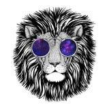 Άγρια εικόνα λιονταριών hipster για τη δερματοστιξία, λογότυπο, έμβλημα, σχέδιο διακριτικών Στοκ Φωτογραφία