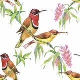 Άγρια εξωτικά πουλιά Watercolor στο άνευ ραφής σχέδιο λουλουδιών στο άσπρο υπόβαθρο Στοκ εικόνα με δικαίωμα ελεύθερης χρήσης