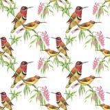 Άγρια εξωτικά πουλιά Watercolor στο άνευ ραφής σχέδιο λουλουδιών στο άσπρο υπόβαθρο Στοκ φωτογραφίες με δικαίωμα ελεύθερης χρήσης