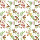 Άγρια εξωτικά πουλιά Watercolor στο άνευ ραφής σχέδιο λουλουδιών στο άσπρο υπόβαθρο Στοκ εικόνες με δικαίωμα ελεύθερης χρήσης