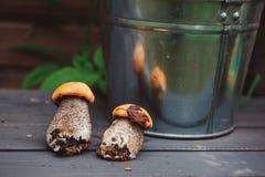 Άγρια εδώδιμα πορτοκαλιά boletus ΚΑΠ μανιτάρια στον ξύλινο πάγκο Στοκ φωτογραφίες με δικαίωμα ελεύθερης χρήσης