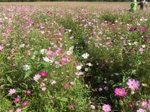 Άγρια ζωηρόχρωμα λουλούδια, πολλά χρώματα στοκ εικόνες
