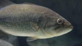 Άγρια θαλάσσια ζωή ψαριών απόθεμα βίντεο
