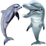 Άγρια θηλαστικά δελφινιών σε ένα ύφος watercolor που απομονώνεται απεικόνιση αποθεμάτων