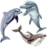 Άγρια θηλαστικά δελφινιών σε ένα ύφος watercolor που απομονώνεται ελεύθερη απεικόνιση δικαιώματος