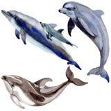 Άγρια θηλαστικά δελφινιών σε ένα ύφος watercolor που απομονώνεται διανυσματική απεικόνιση