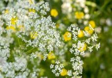 Άγρια κινηματογράφηση σε πρώτο πλάνο λουλουδιών Στοκ φωτογραφία με δικαίωμα ελεύθερης χρήσης
