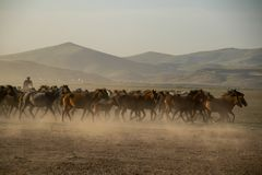 Άγρια κοπάδια αλόγων που τρέχουν στην έρημο, kayseri, Τουρκία στοκ φωτογραφία