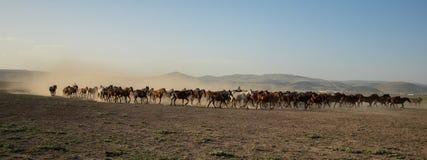 Άγρια κοπάδια αλόγων που τρέχουν στην έρημο, kayseri, Τουρκία στοκ φωτογραφία με δικαίωμα ελεύθερης χρήσης