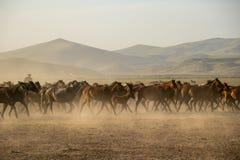 Άγρια κοπάδια αλόγων που τρέχουν στην έρημο, kayseri, Τουρκία στοκ εικόνα με δικαίωμα ελεύθερης χρήσης