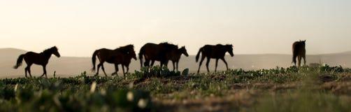 Άγρια κοπάδια αλόγων που τρέχουν στον κάλαμο, kayseri, Τουρκία στοκ φωτογραφία