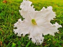 Άγρια κρύπτη λουλουδιών  Στοκ φωτογραφία με δικαίωμα ελεύθερης χρήσης