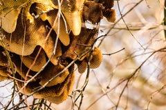 Άγρια κυψέλη σε ένα δέντρο στοκ φωτογραφίες