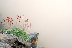 Άγρια λουλούδια άνοιξη στο μυθικό υποστήριγμα Olympus, Ελλάδα Στοκ φωτογραφίες με δικαίωμα ελεύθερης χρήσης