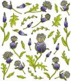 Άγρια λουλούδια και φύλλα κάρδων απεικόνιση αποθεμάτων