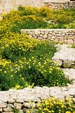Άγρια λουλούδια που αυξάνονται στις καταστροφές τοίχων, Βικτώρια, Gozo στοκ εικόνες