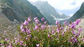 Άγρια λουλούδια που ταλαντεύονται στον αέρα στα βουνά απόθεμα βίντεο