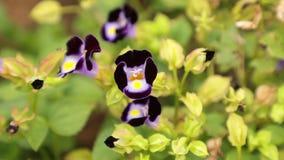 Άγρια λουλούδια που φυσούν στο συνδετήρα αέρα hd απόθεμα βίντεο