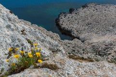 Άγρια λουλούδια στους απότομους βράχους Στοκ εικόνες με δικαίωμα ελεύθερης χρήσης