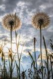 Άγρια λουλούδια στο μπλε ουρανό στοκ εικόνα