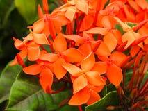 Άγρια λουλούδια του νησιού Λα Digue Στοκ φωτογραφία με δικαίωμα ελεύθερης χρήσης