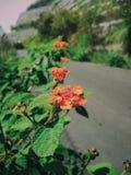 Άγρια λουλούδια φύσης στην οδό στοκ εικόνες