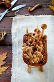 Άγρια μανιτάρια αγαρικών μελιού στο ξύλινο υπόβαθρο Στοκ εικόνες με δικαίωμα ελεύθερης χρήσης