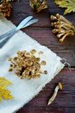 Άγρια μανιτάρια αγαρικών μελιού στο ξύλινο υπόβαθρο Στοκ φωτογραφία με δικαίωμα ελεύθερης χρήσης