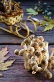 Άγρια μανιτάρια αγαρικών μελιού στο ξύλινο υπόβαθρο Στοκ εικόνα με δικαίωμα ελεύθερης χρήσης
