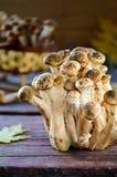 Άγρια μανιτάρια αγαρικών μελιού στο ξύλινο υπόβαθρο Στοκ Εικόνα