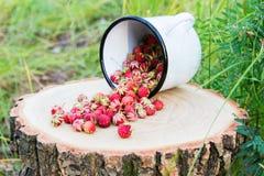 Άγρια μούρα στο δάσος Στοκ Φωτογραφίες