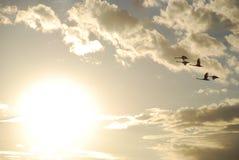 Άγρια μύγα χήνων Στοκ φωτογραφίες με δικαίωμα ελεύθερης χρήσης