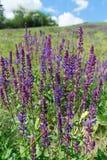 Άγρια λογικά λουλούδια Στοκ Εικόνες