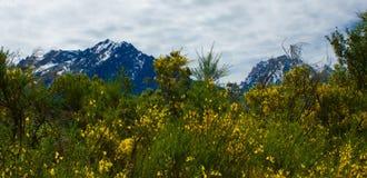 Άγρια λουλούδια κάτω από τα βουνά Στοκ φωτογραφία με δικαίωμα ελεύθερης χρήσης
