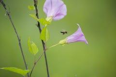 Άγρια λουλούδια και η μέλισσα Στοκ Εικόνες