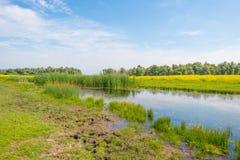 Άγρια λουλούδια κατά μήκος μιας λίμνης το καλοκαίρι Στοκ εικόνα με δικαίωμα ελεύθερης χρήσης