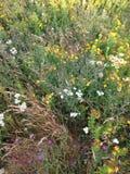 Άγρια λουλούδια νέα γη Στοκ εικόνες με δικαίωμα ελεύθερης χρήσης