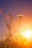 Άγρια λουλούδια ομορφιάς κάτω από τον ήλιο βραδιού Στοκ Φωτογραφίες