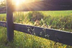 Άγρια λουλούδια που αυξάνονται στο φράκτη στοκ φωτογραφίες με δικαίωμα ελεύθερης χρήσης