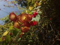 Άγρια λουλούδια που κρεμούν κάτω στοκ εικόνα