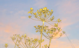 Άγρια λουλούδια σε έναν τομέα στον ήλιο Στοκ φωτογραφία με δικαίωμα ελεύθερης χρήσης