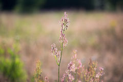 Άγρια λουλούδια στην ηλιόλουστη ημέρα Στοκ Εικόνες